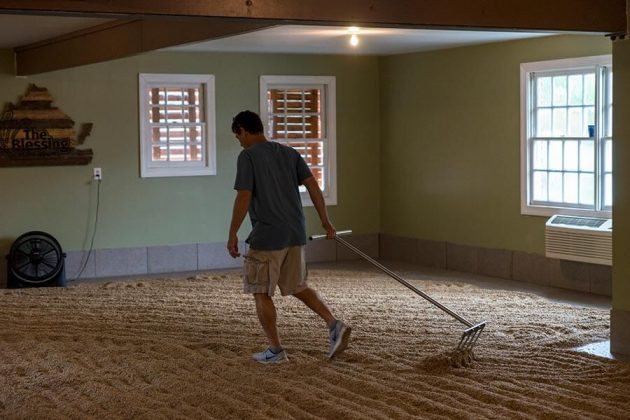Rick Wasmund hand rakes grain on the floor of his malthouse