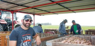 David Souza out in his family's farm as sweet potatoes are harvested.